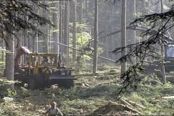 """""""Waldverwüstungen wie städtische Großbaustellen"""""""