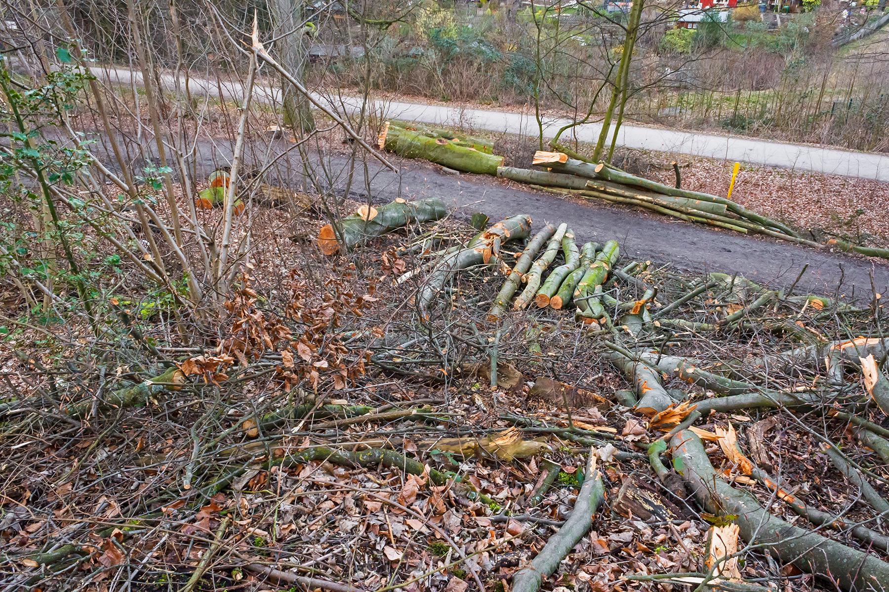 Brennholzernte im Stadtwald