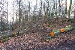 keine alten Bäume mehr