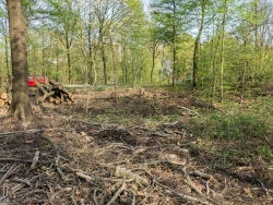 Sieht so naturnahe Waldpflege aus?