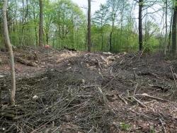 Verwüsteter Waldboden