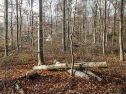 ein holzarmer, durchsichtiger Wald ist entstanden