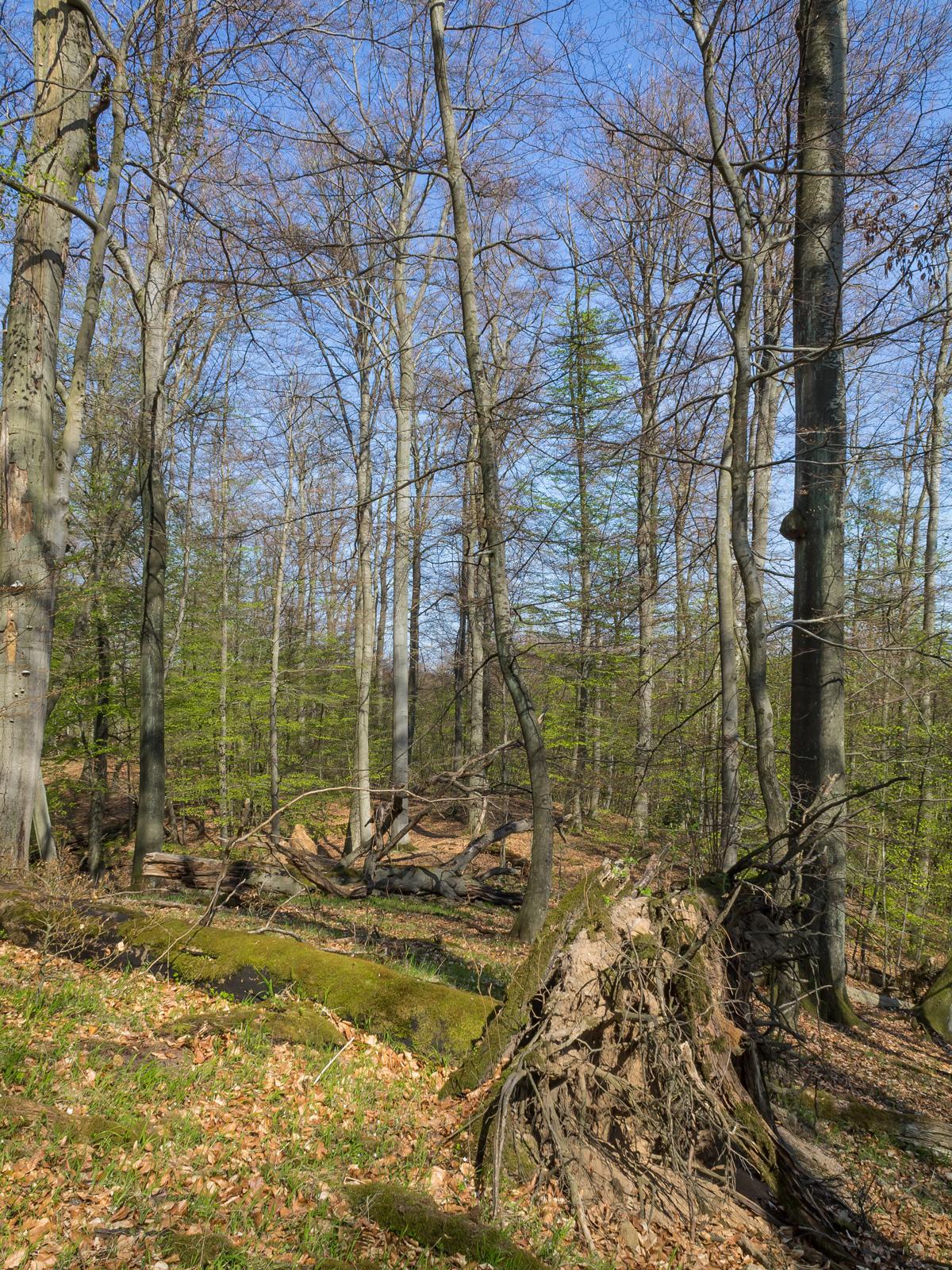 Totholz macht ein Drittel der lebenden Holzmasse aus
