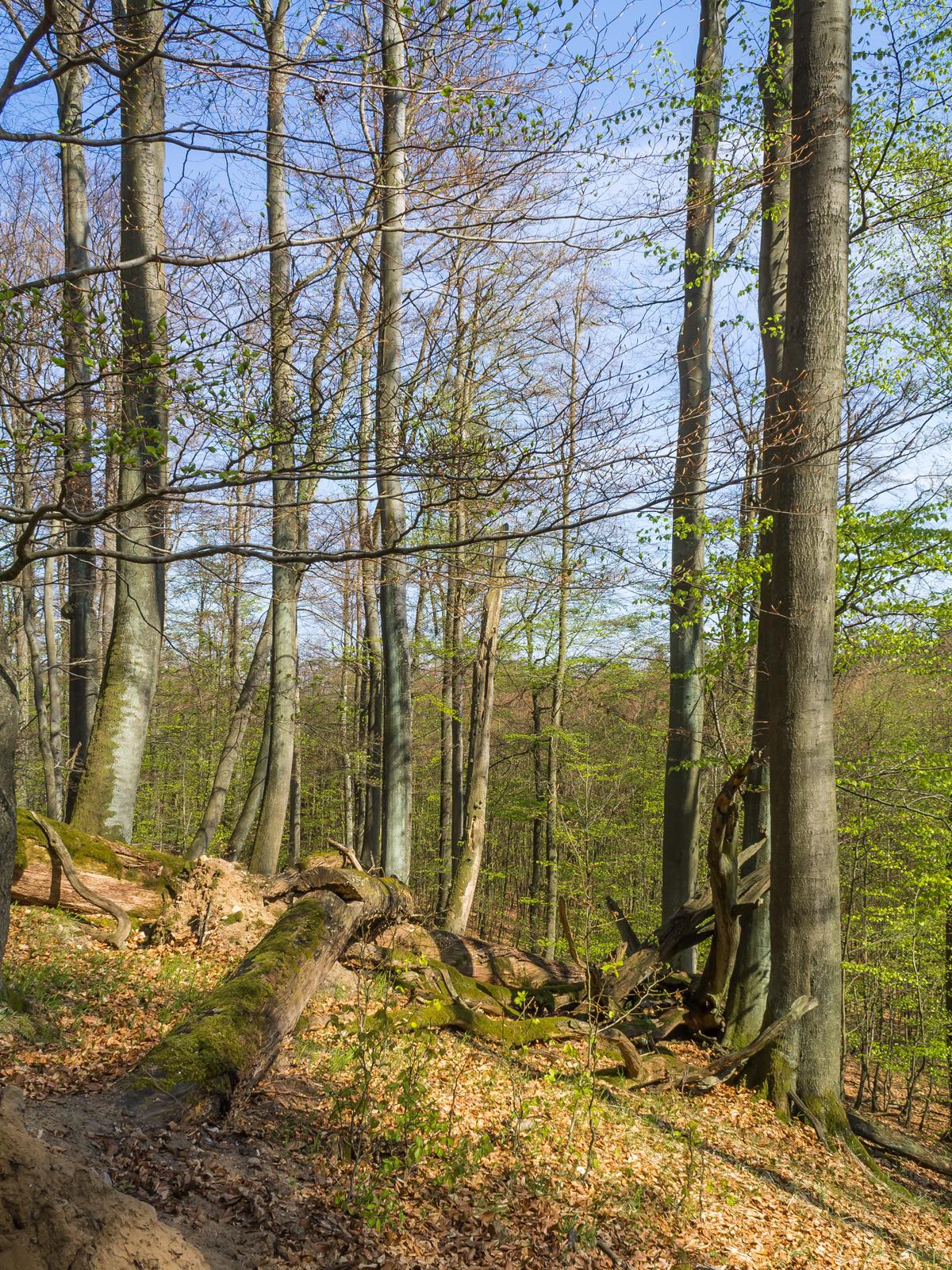 Totholz und natürliche Verjüngung im Vorder- und Hintergrund