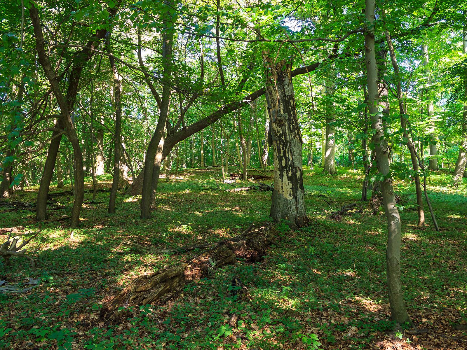starkes stehendes Totholz und stark zersetztes liegendes Totholz