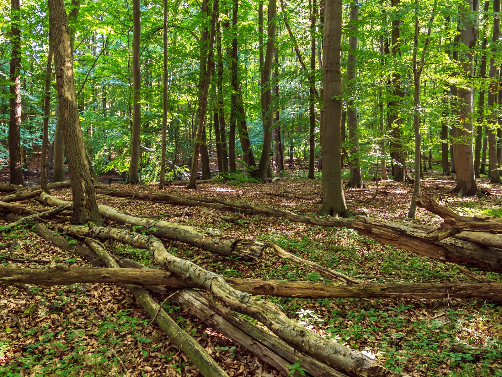 liegendes Totholz