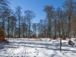 Buchenwälder am Elisabether Platz