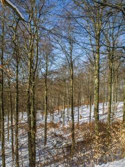 Buchenwälder zwischen Lingen- und Ahornkopf