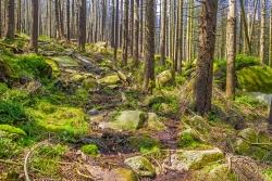 Reste des mit Steinen ausgebauten Wegs