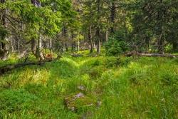 vernässter Pfad mitten durch den Urwald