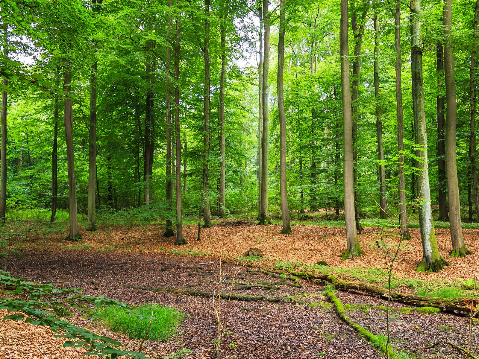 ausgetrockneter Tümpel im Wald