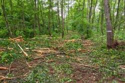Verbreiterung der Rückegasse zur Holzlagerung