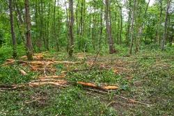 einschichtiger Forst ohne Unterstand