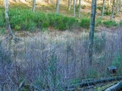 Südseite mit Birken, Nordseite mit Kiefern bewachsen