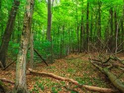 ohne Schutztzaun kommt kein Baum durch