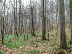 Göttinger Stadtwald