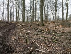 Rückegasse mit Baumstümpfen und Kronenabfall