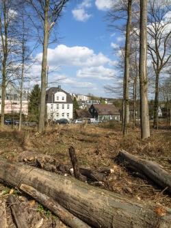 breite kahlgeschlagene Bresche, keine schützenden Bäume am Waldrand