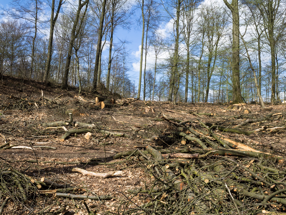 durch Baumfällungen, Sägearbeiten und Holzrücken zerstörter Waldboden