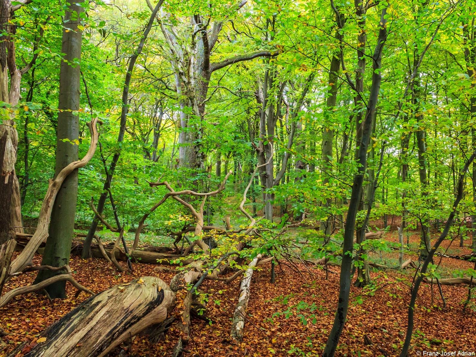 Strukturreichtum in urwaldähnlichem Dickicht
