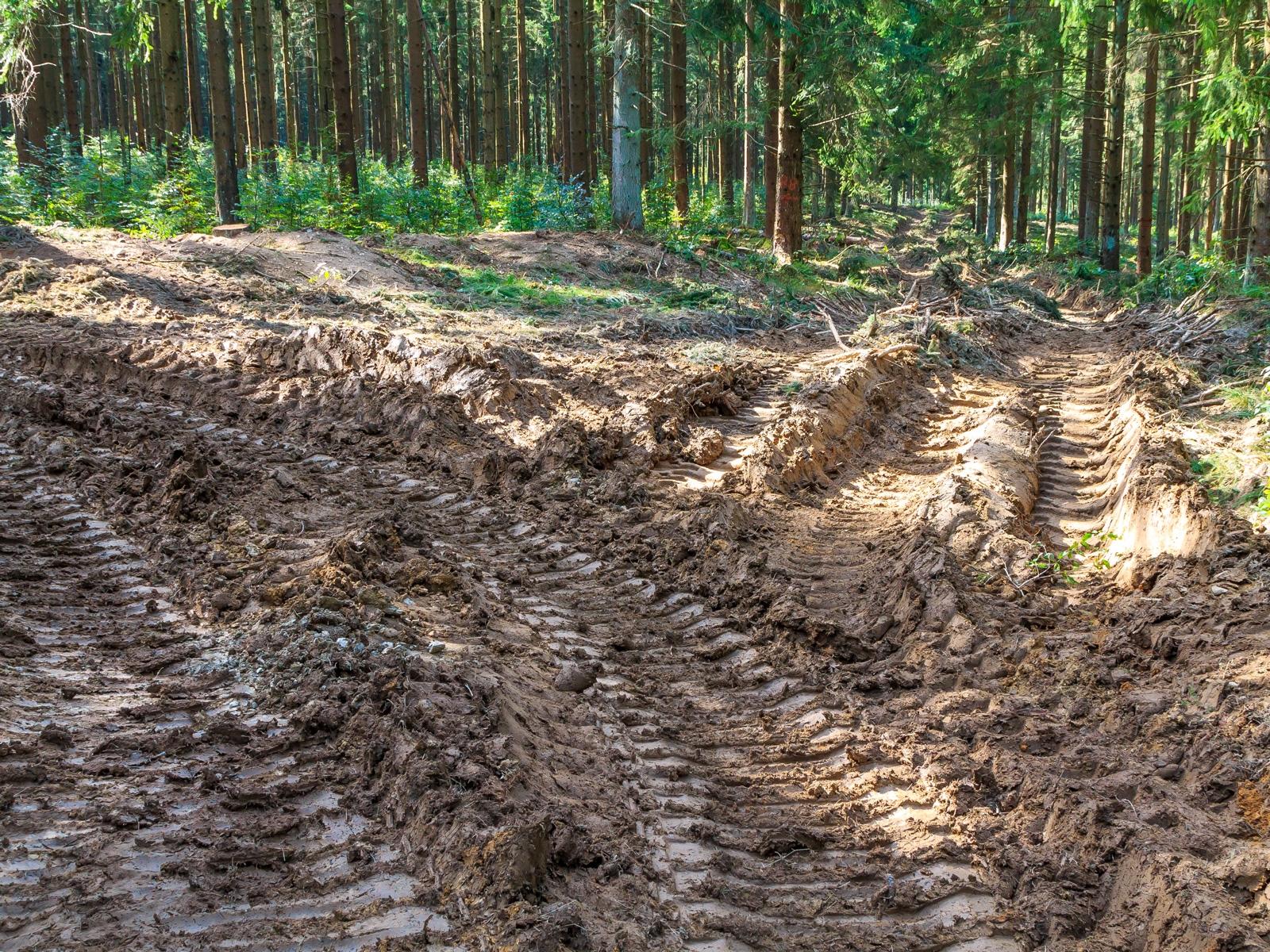 Rückegasse im Dedenborner Fichtenwald mit Buchenunterpflanzung