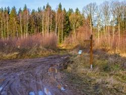 Vorwald aus jungen Birken am Bachübergang