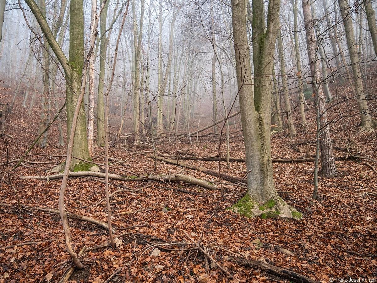 Wald_03