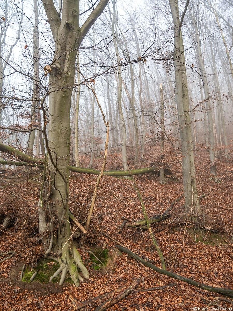 Wald_04
