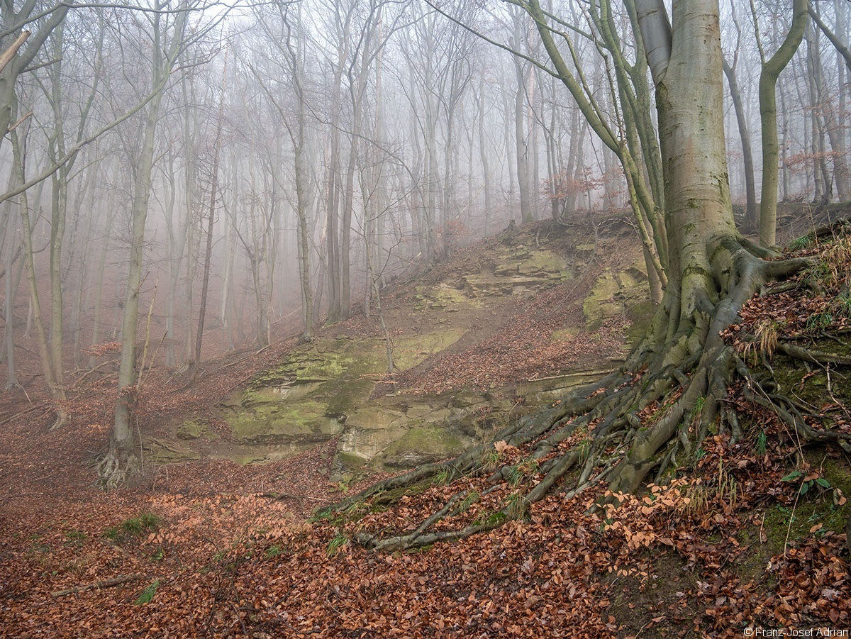 Wald_05