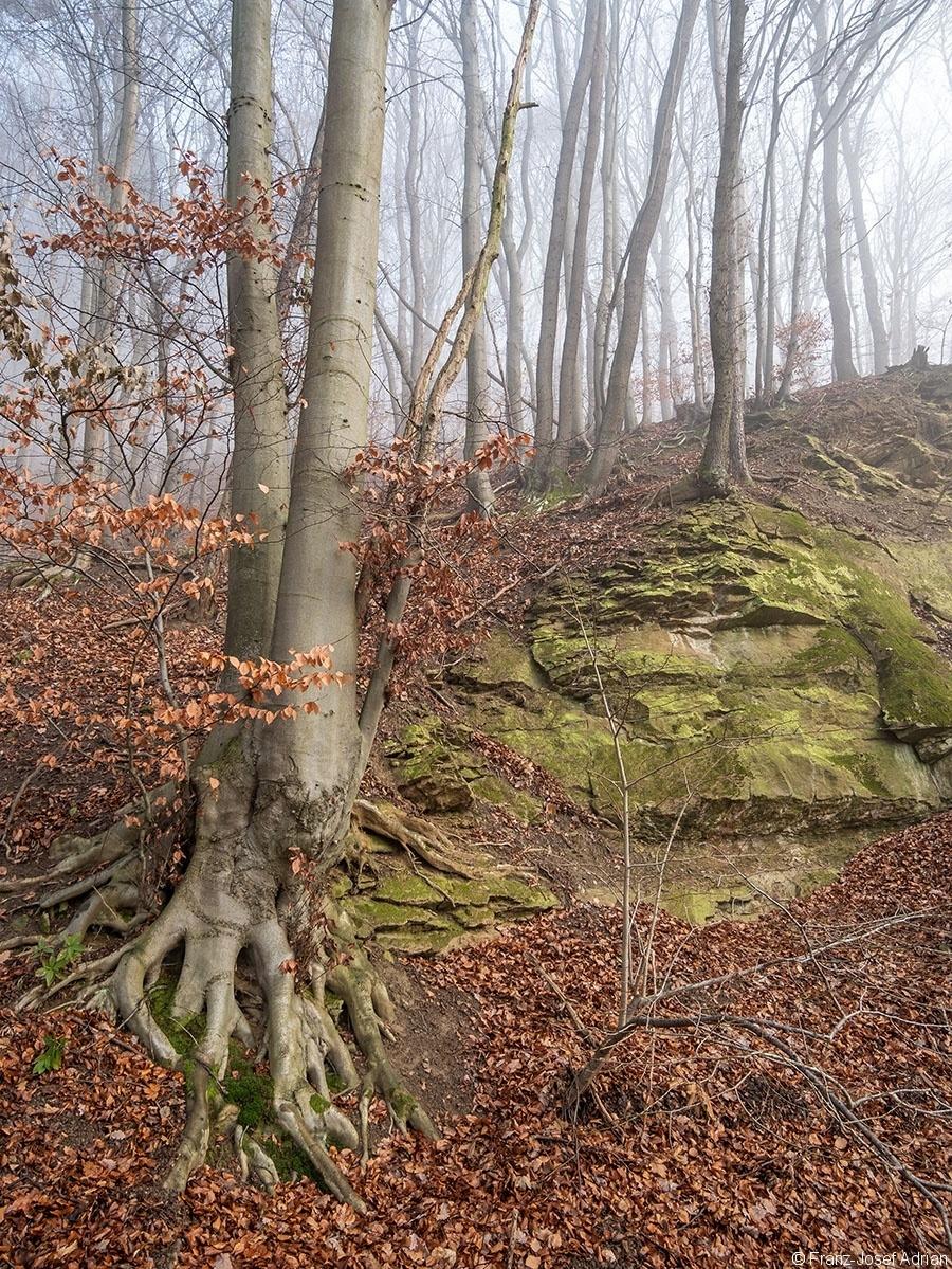 Wald_06