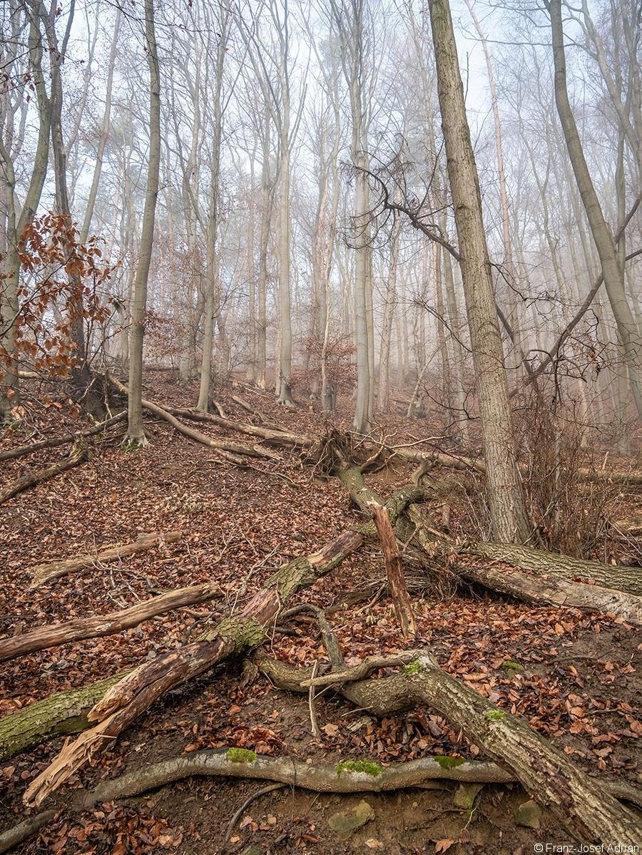 Wald_07