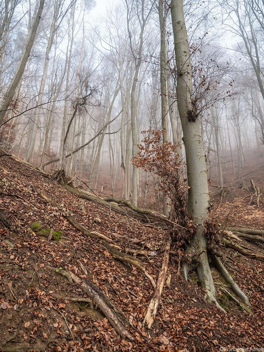 Wald_08