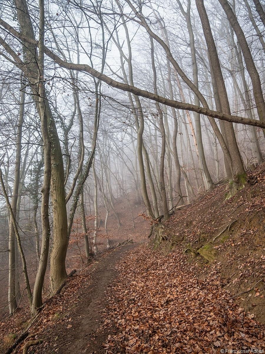 Wald_09
