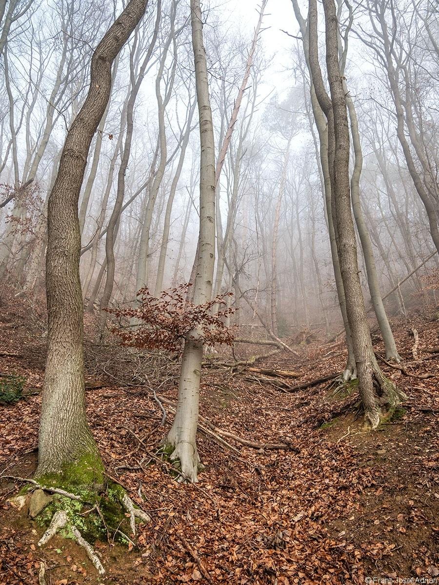Wald_12