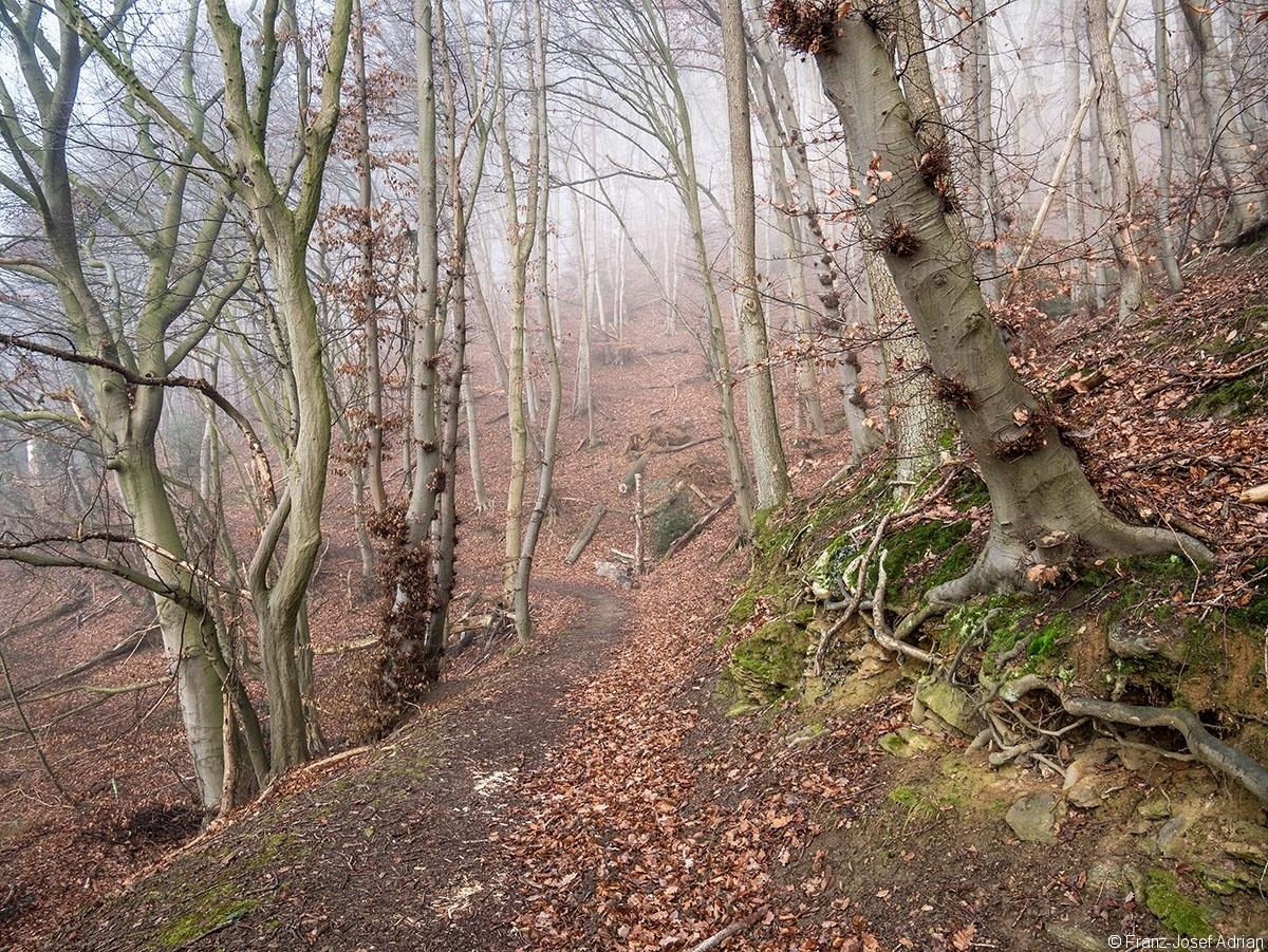 Wald_13