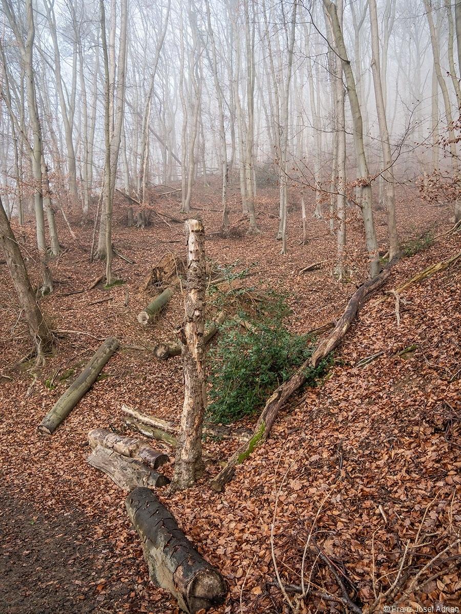 Wald_14