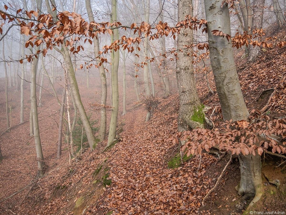 Wald_19