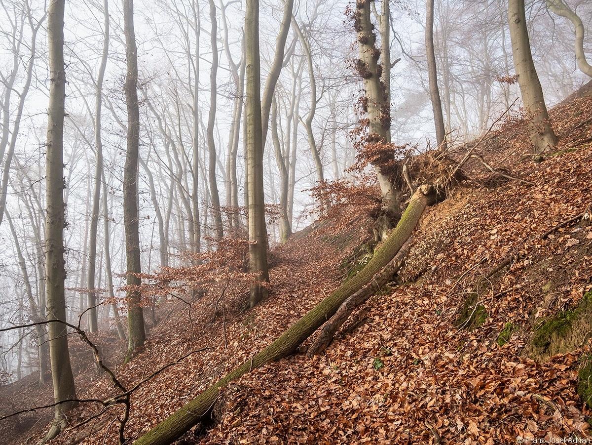 Wald_20