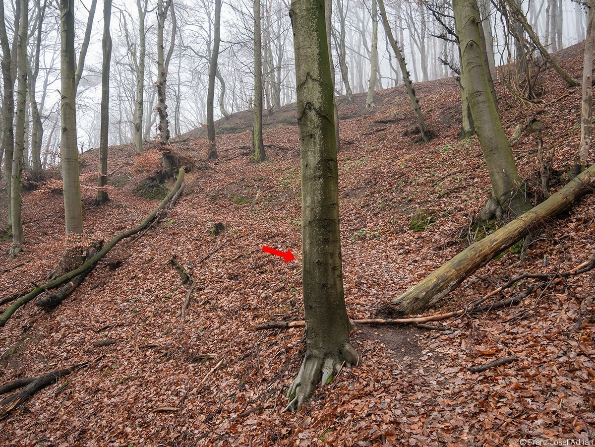 Wald_28