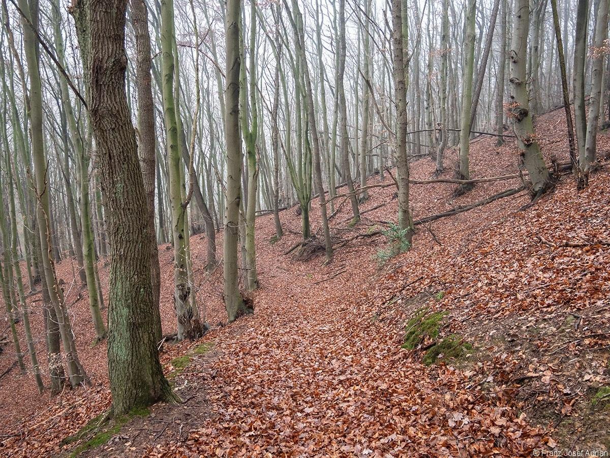 Wald_32