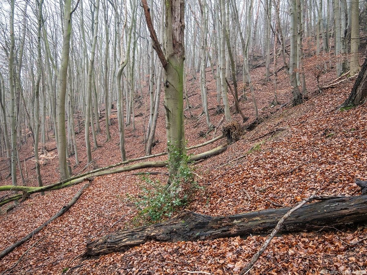 Wald_33