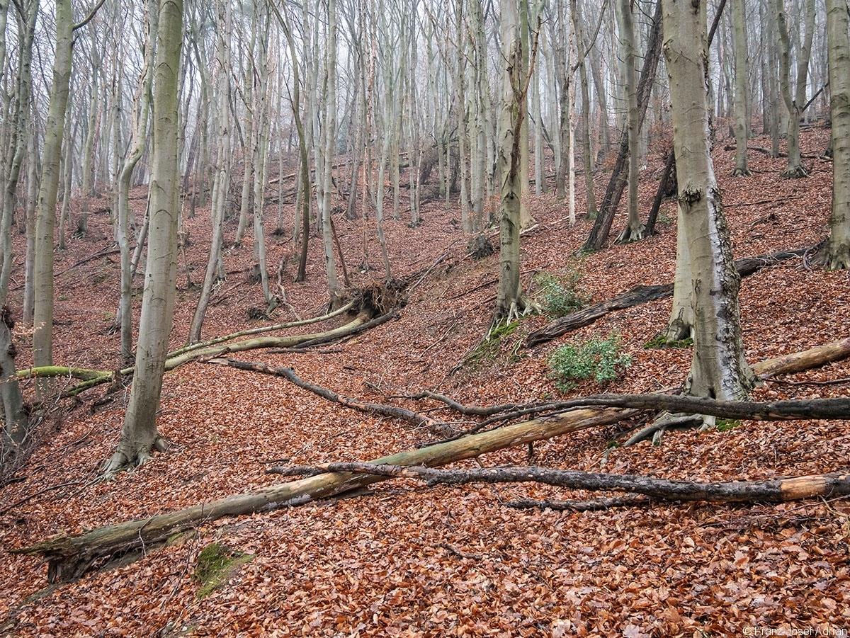 Wald_34