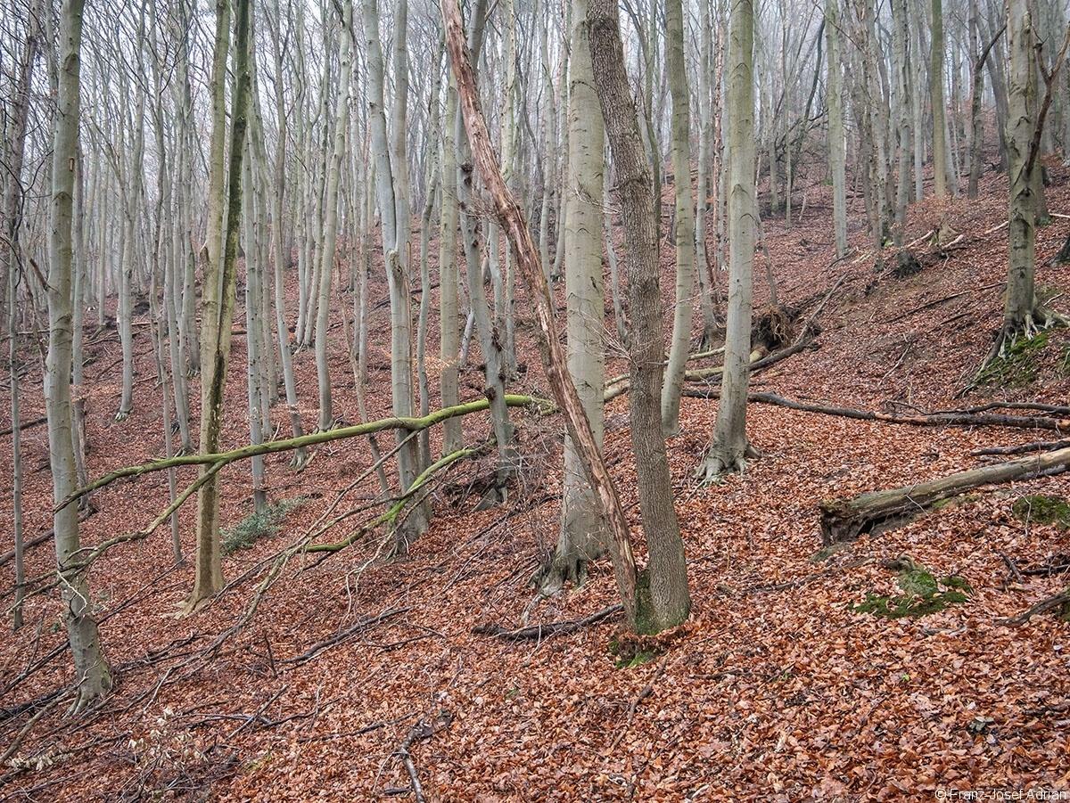 Wald_35