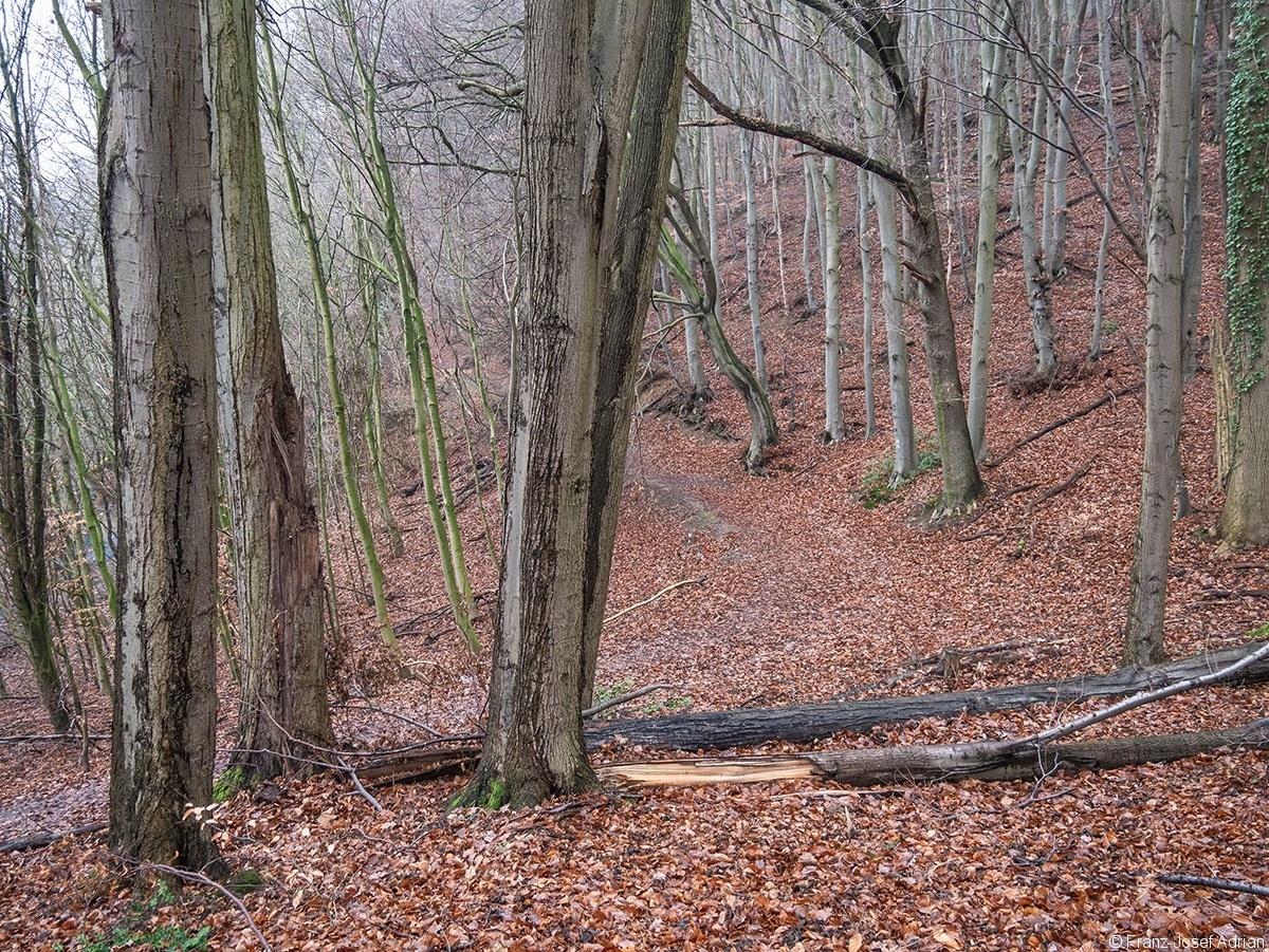 Wald_36