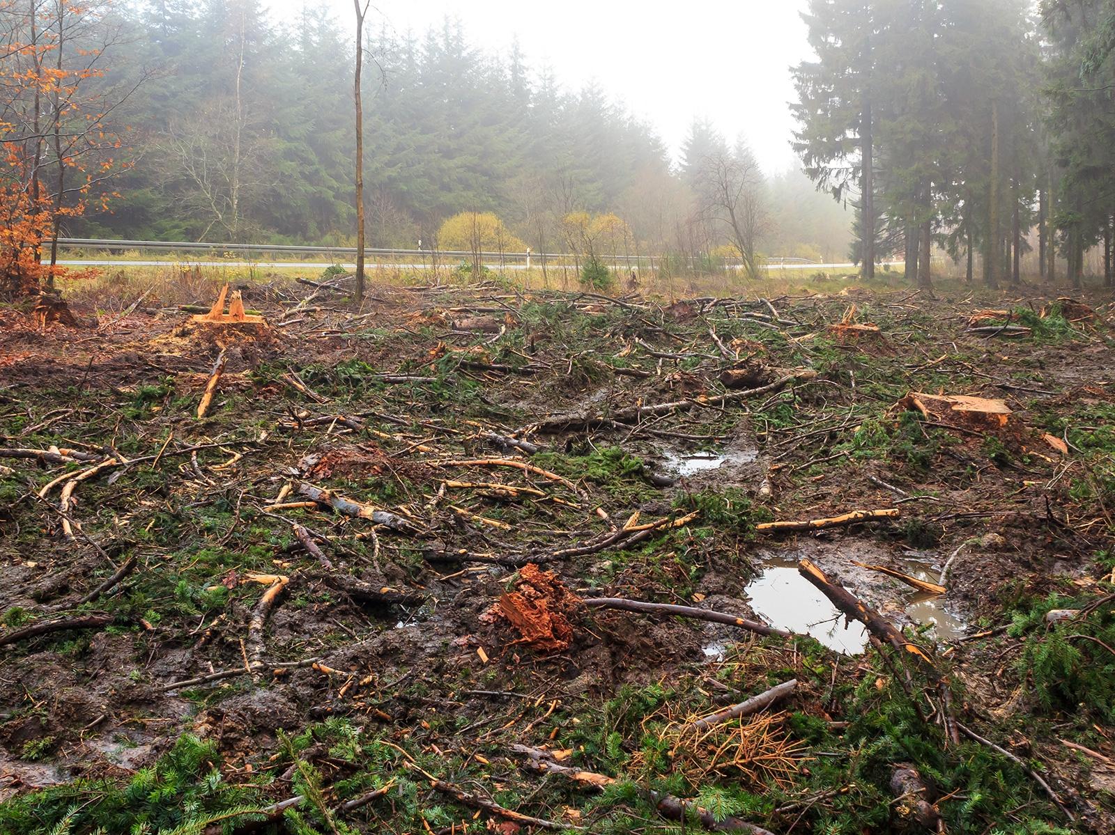 schwere Bodenschäden, Pfützen auf verdichteten Waldboden