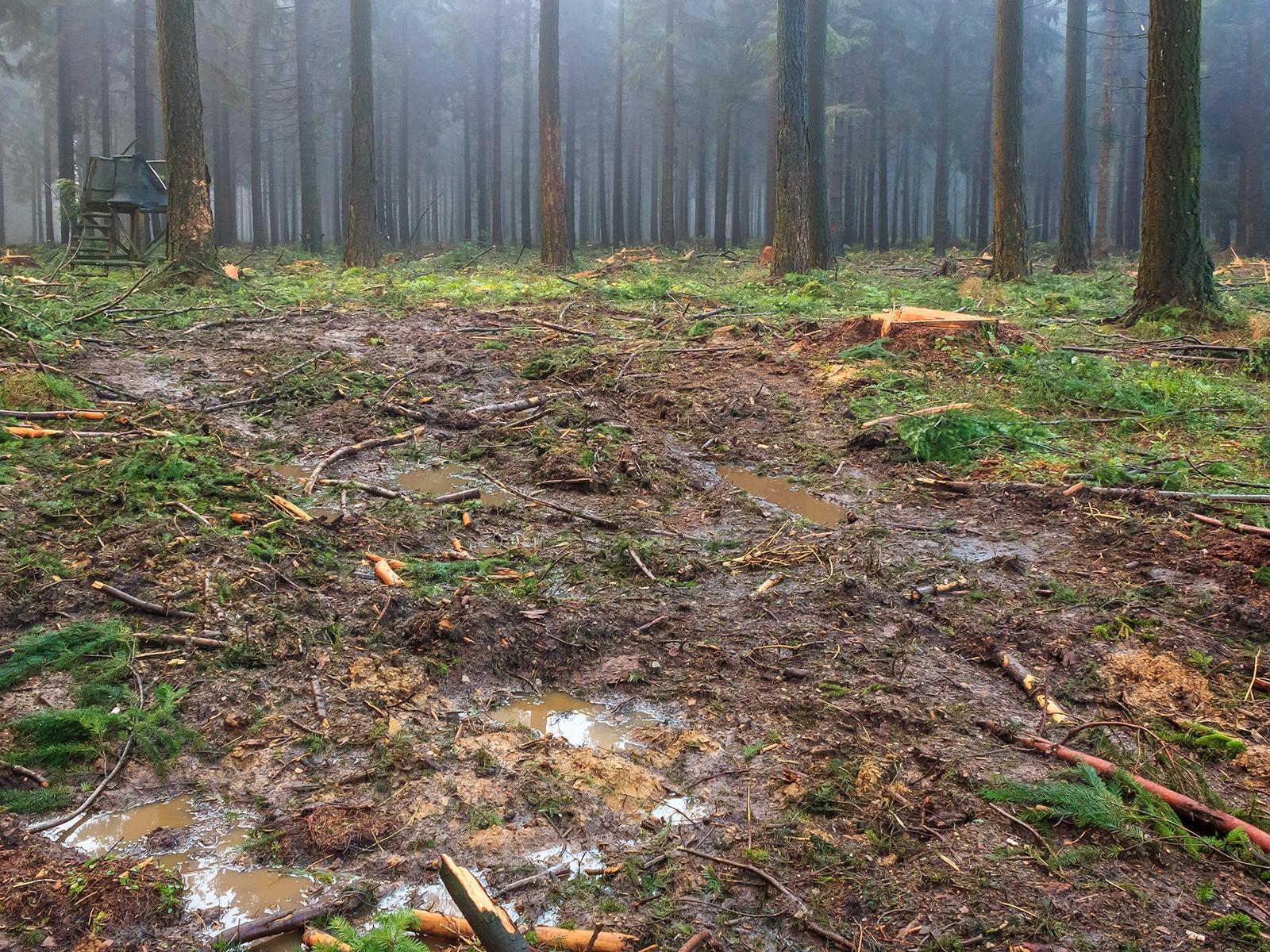 flächig mit tonnenschwerem Gerät befahrener Waldboden