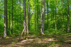 Ungleichaltrigkeit - Baumriesen - Totholzreichtum