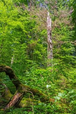 100 Festmeter Totholz pro Hektar