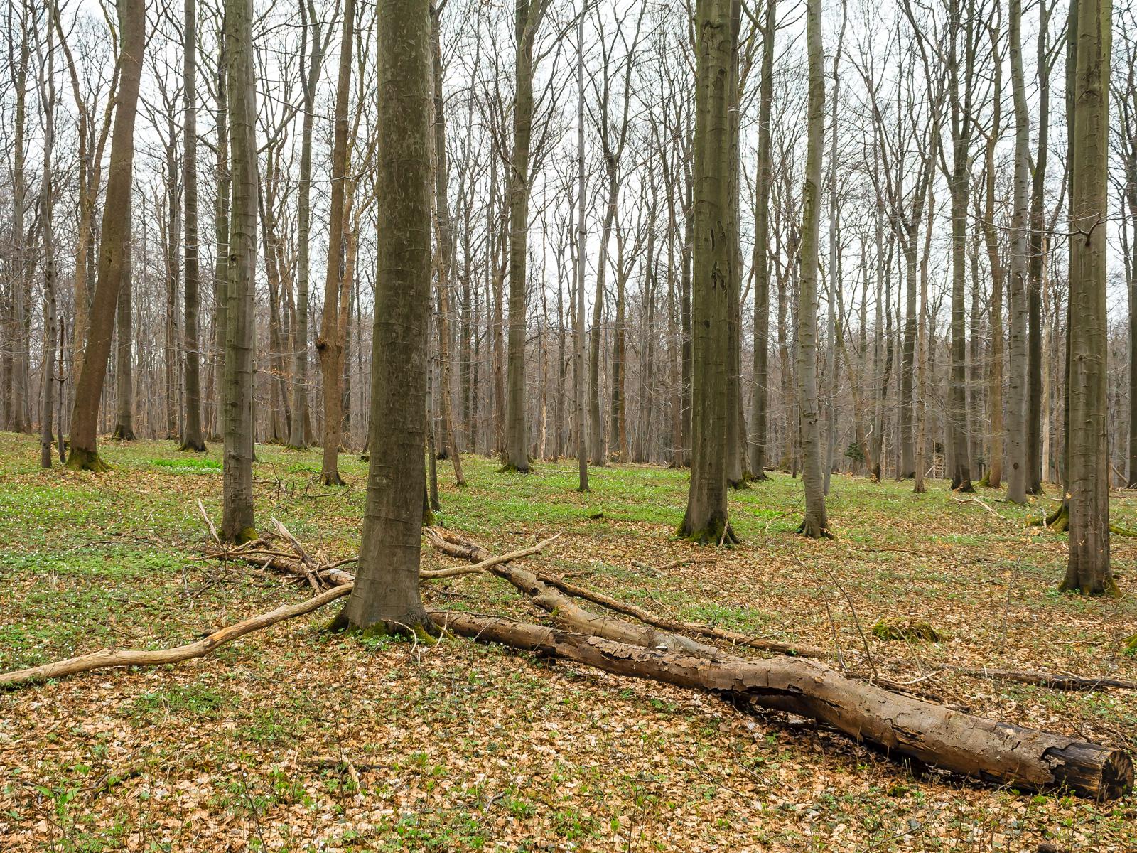 liegender Biotopbaum