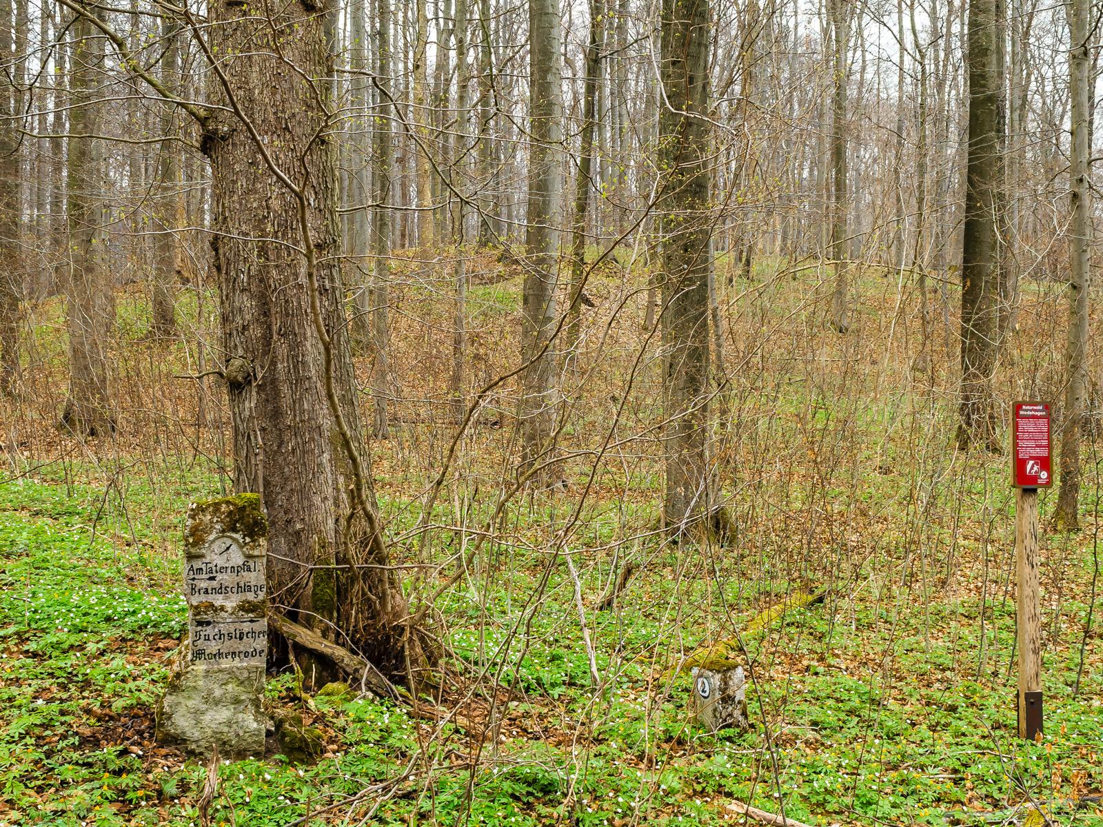alter Wegweiser vor Ahorn-Biotopbaum